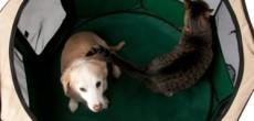 Precision Pet Portable RV Dog Pen