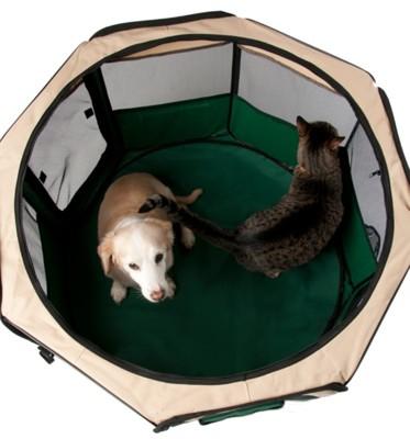 Motorhome best option for dog run