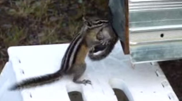 It's Not Often That You Hope Chipmunks Get INTO Your RV. But You'll Want These Little Guys to Succeed. [VIDEO]