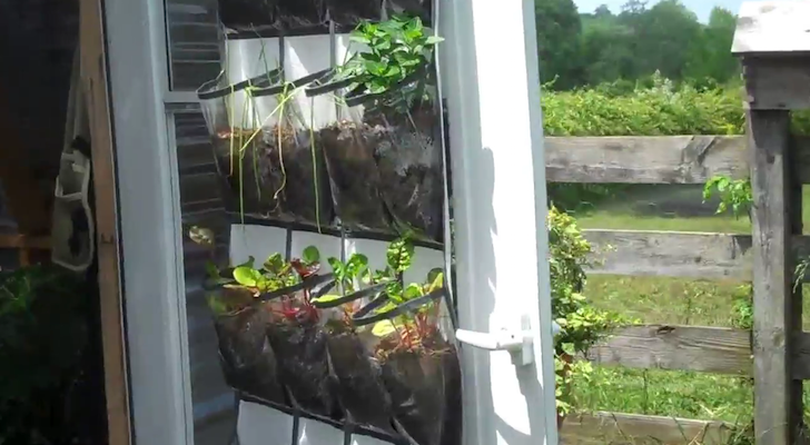 DIY Shoe Organizer Garden Perfect For Growing Vegetables And Fruits In Your RV