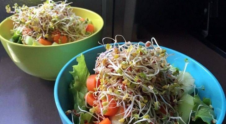 RV Friendly Gardening – Grow Your Own Sprouts