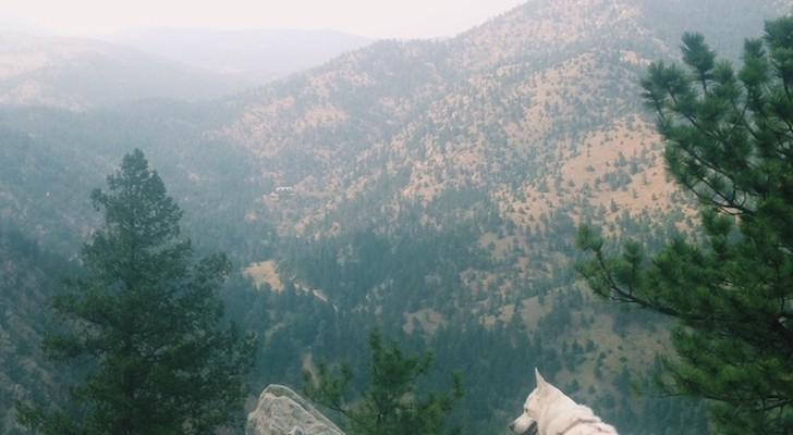 5 Dog-Friendly Denver Area Hikes You Can't Miss