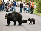 Essential Tips For Camping In Bear Country