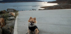 20 Pet-Friendly RV Parks In California Where You Can Take Your Four Legged Friends