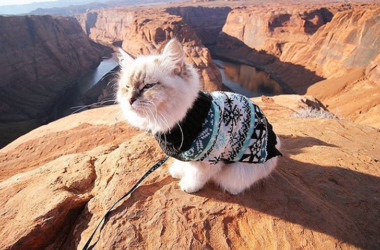 Camping With Cats: This Instagram Account Is Just Purrfect