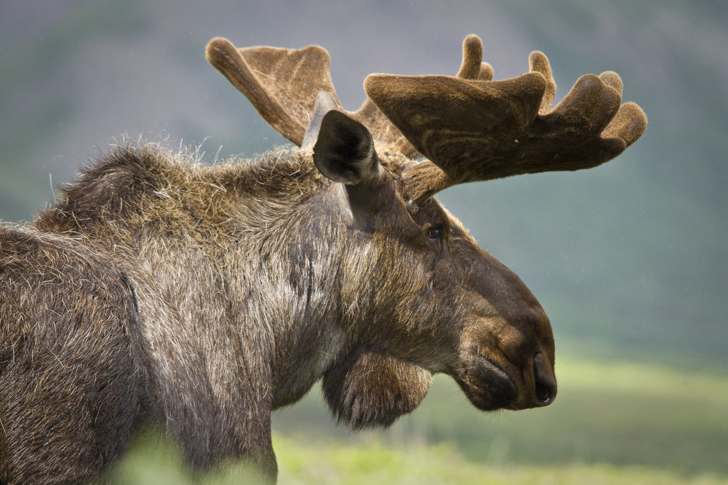 Top 10 Reasons To Visit Denali National Park In Alaska